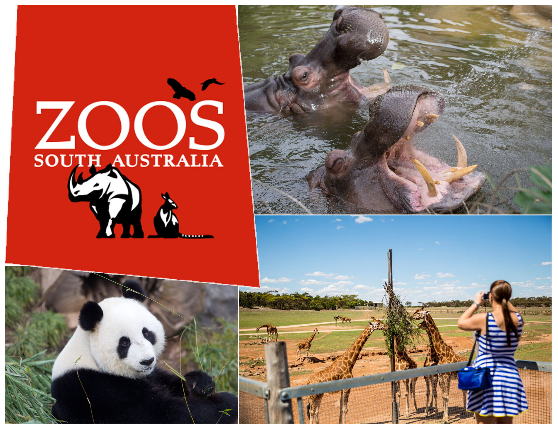 Zoos South Australia, VTicket